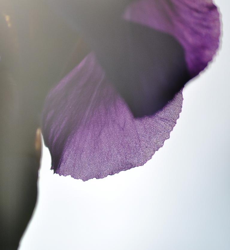 Iris in white glow