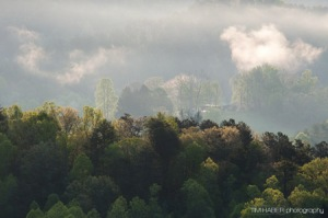 Early morning fog rising (2)