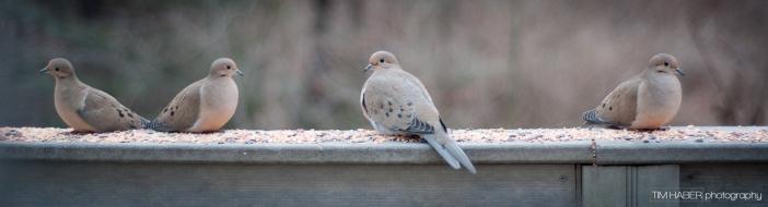 Doves four