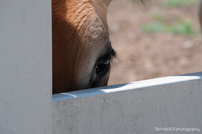 I see you, too