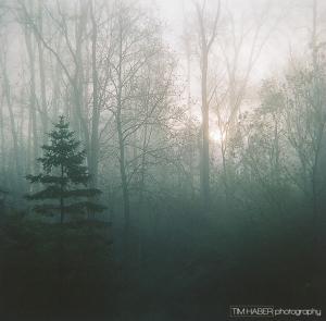 Foggy Tuesday morning